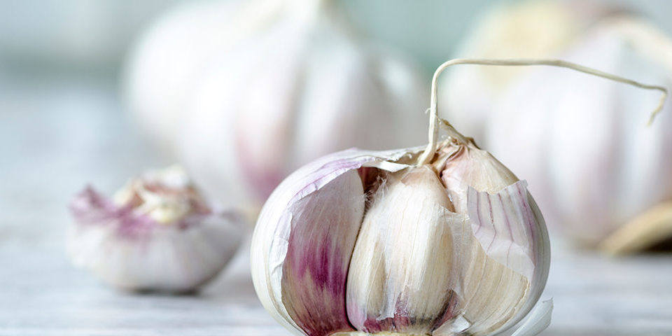 How-Aged-Garlic-can